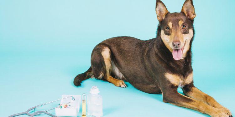 Corso sulle emergenze cardiologiche del cane e del gatto